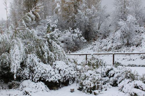 Snow  1 5 09