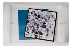 Sunprint-arrange-250